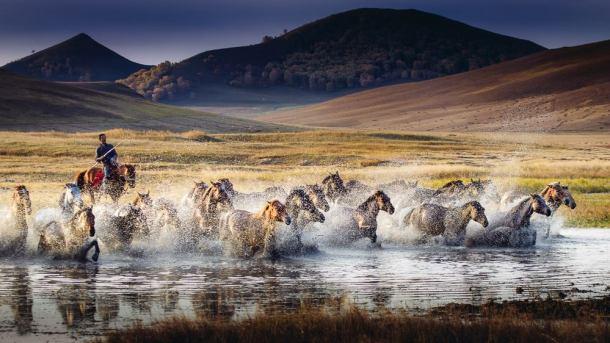 "Copyright William Yu Photography, ""The Morning Run"""