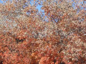 秋天来了!L'automne est arrivé – Un après-midi à Xiangshan(香山)